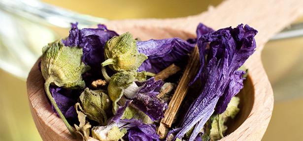 vin infusion santé plantes estragon origan mauve