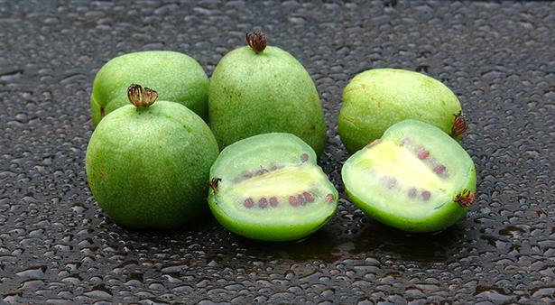 Fruit méconnu Kiwai
