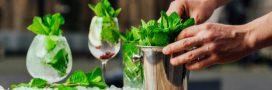 Fabriquez votre sirop de menthe: fraîcheur garantie