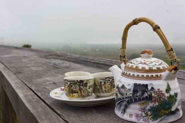 théier, faire pousser du thé plante