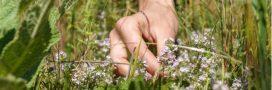 Beauté au naturel: des recettes avec du thym