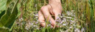 Beauté au naturel : des recettes avec du thym