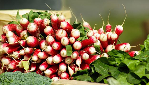aliment-cru-radis-legume