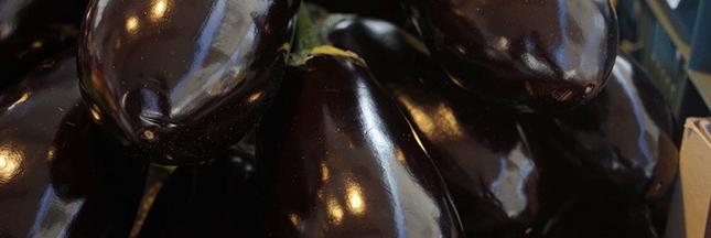 aubergine-agriculture-production-recette-legume