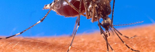 Pourquoi n'échappe-t-on pas aux piqûres de moustiques ?