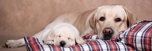 10 drôles de couples d'animaux mignons : mère et chiots !
