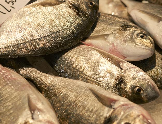 shutterstock-poisson-dorade-grise-ete-mer-ocean-peche
