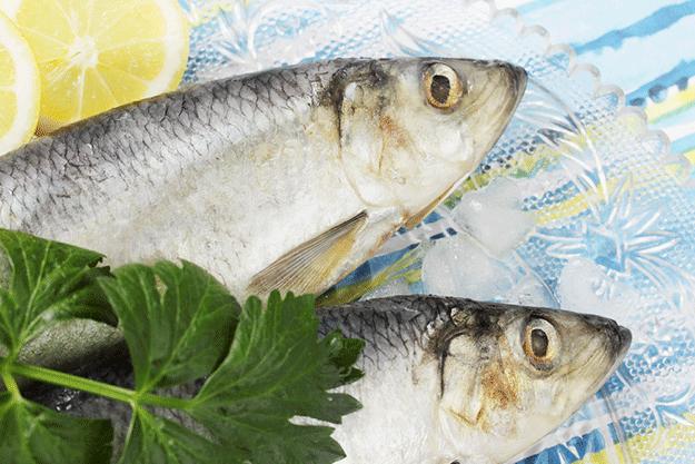 Manger du poisson en t 10 esp ces qui ne sont pas menac es for Poisson a acheter