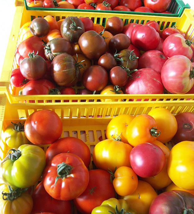 trucs et astuces conseils tomates bio jardin