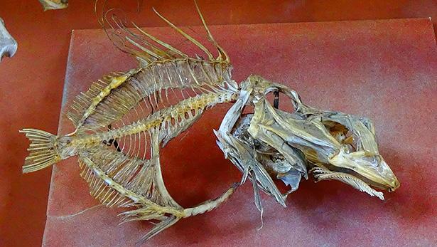 saint-pierre poisson france état des pêches