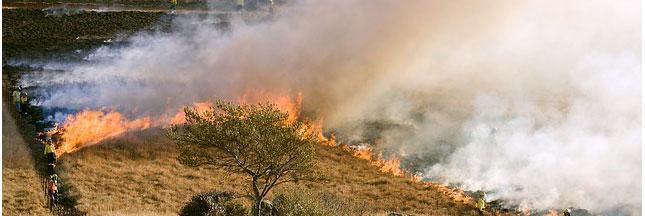 Les feux de forêt en Indonésie étouffent la Malaisie et Singapour