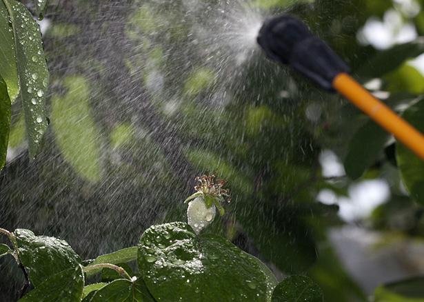 glyphosate interdit cancérigène pesticides roundup