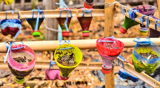 potager urbain culture fruits et légumes en ville sur un balcon ou une terrasse