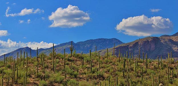 cactus-desert-extinction