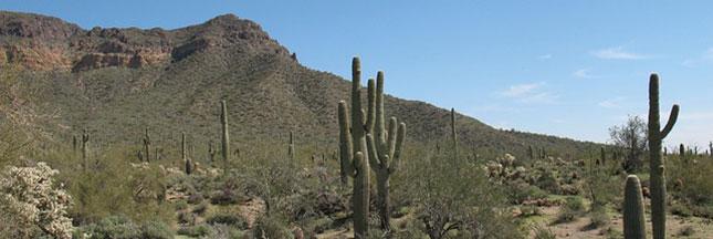 Près d'un tiers des cactus pourrait disparaître d'ici 50 ans