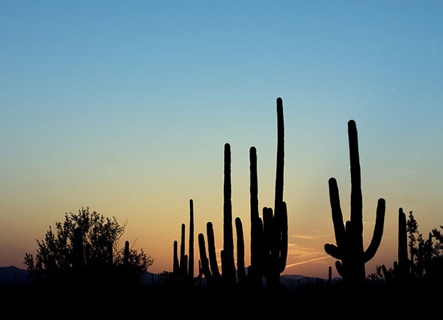 cactus-menace-extinction-desert