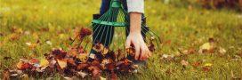 Les gestes essentiels au jardin bio pour novembre