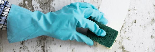 Les astuces anti-moisissures pour un habitat propre et sain