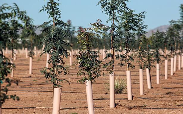 planter un arbre arbuste jardin bio