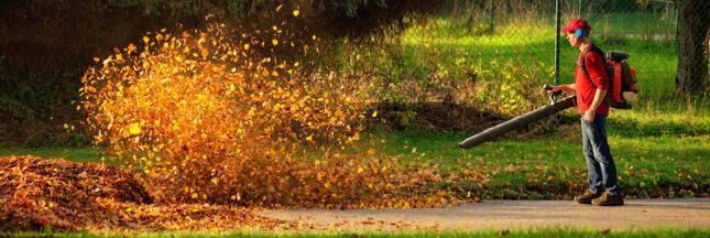 Les souffleurs à feuilles, un fléau à bannir ?