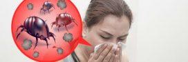 Tous les bons plans anti-acariens naturels pour se protéger des allergies