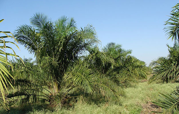 huile-de-palme-indonesie-allemagne
