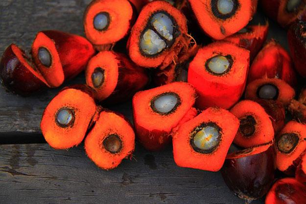 huile-de-palme-indonesie