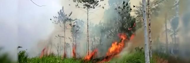 L'Indonésie et les orangs-outans brûlent, personne ne bouge