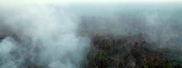 incendie indonésie feux orang-outan