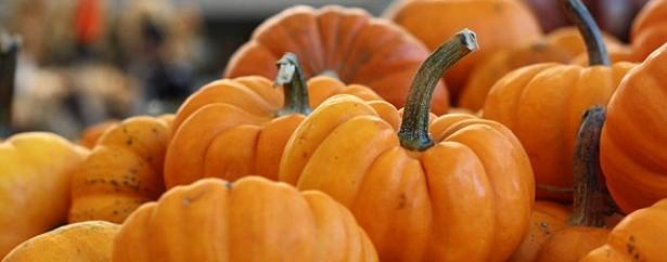 panier de légumes novembre, novembre, amap, courges, cucurbutacées, Jack Be Little
