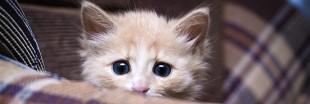 Pourquoi les chats ont-ils peur des concombres ?