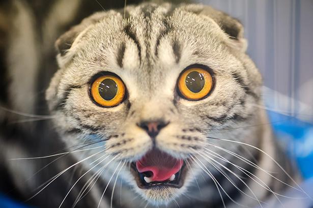 chaton chat peur concombre
