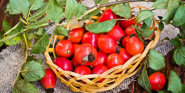 cynorrhodon arbuste fruit santé