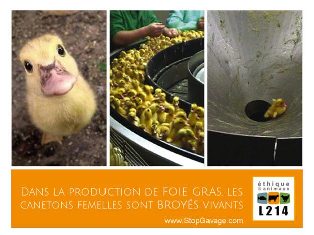 affiche-L214-foie-gras