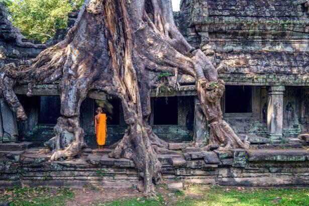 arbres les plus originaux, Ta Phrom, fromager