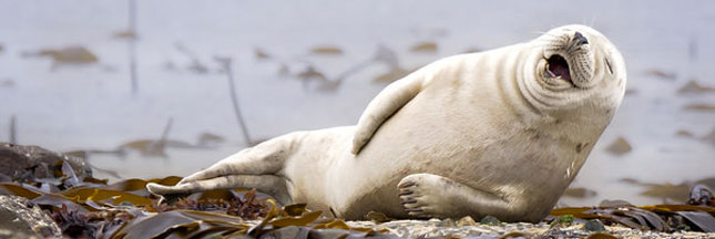 Les 10 photos d'animaux sauvages les plus drôles de l'année 2015