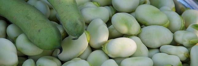 Savoir tirer profit des légumineuses, des aliments pleins de ressources