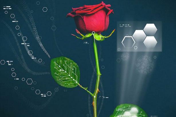 rose-electricite-suede-chercheurs