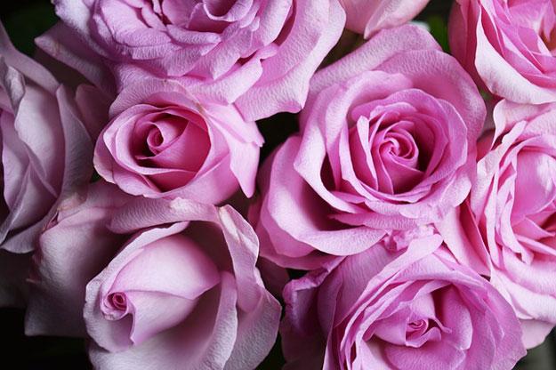 roses-electricite-suede-chercheurs-2