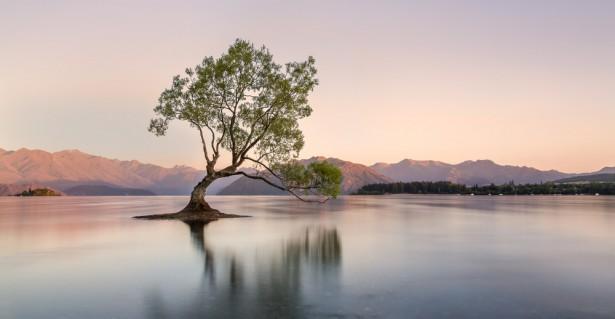 matins, nouvelle Zélande