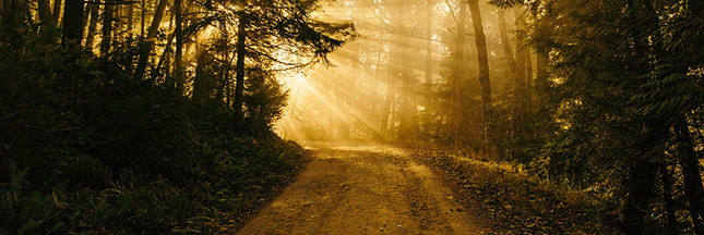 Partagez vos aspirations pour 2016 : une vision claire vous portera