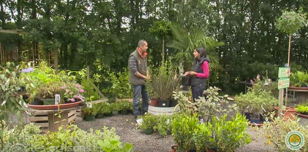 jardiner en ville, artisans-du-vegetal