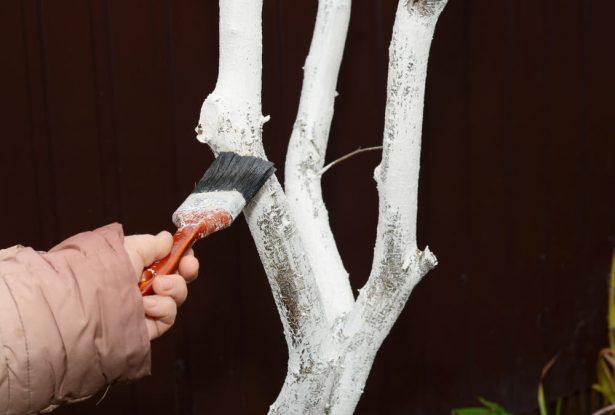 nettoyer le tronc