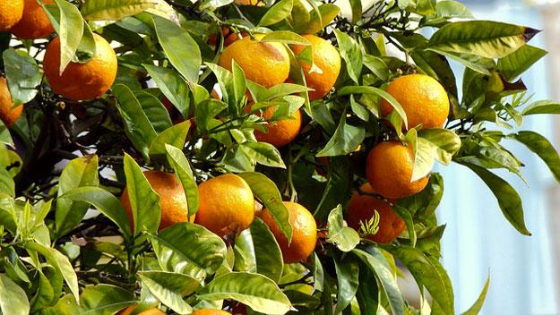 bonne-humeur-oranger