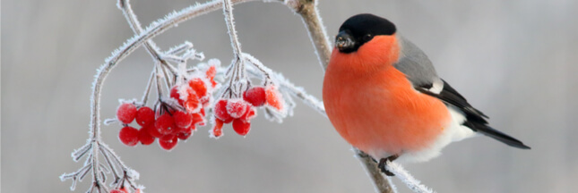 Le comptage national des oiseaux de jardin a lieu ce weekend