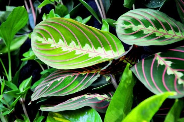 Entretenir ses plantes d 39 int rieur en janvier for Maladie plante verte interieur