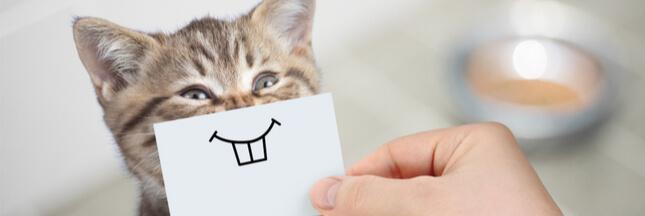 Les 7 règles d'or pour bien nourrir son chat