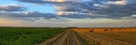 L'agriculture biologique peut nourrir 9 milliards d'habitants en 2050, les scientifiques l'affirment