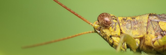 Ces insectes - et poils de rat - qu'on mange sans le savoir