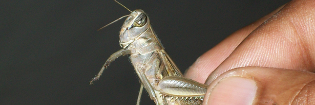 Exo : les barres protéinées à base d'insectes